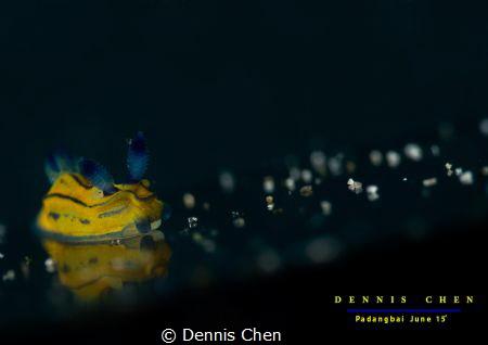 Tambja sp by Dennis Chen