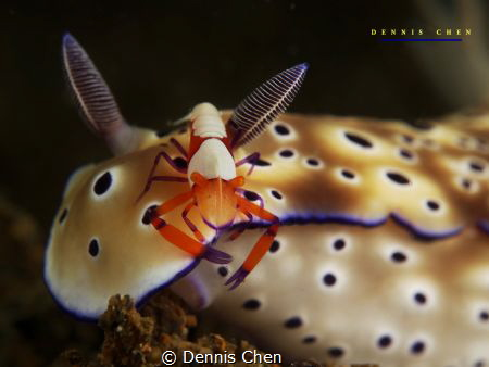 Give me a break