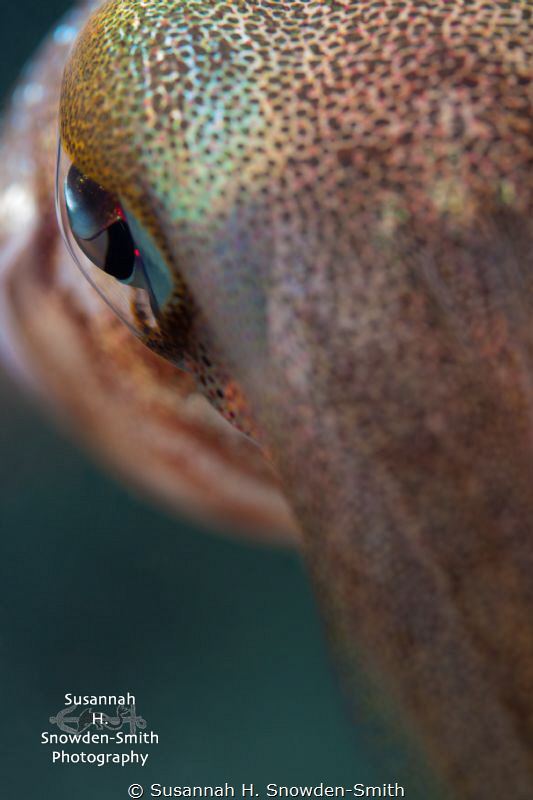 """Eye Of The Squid""
