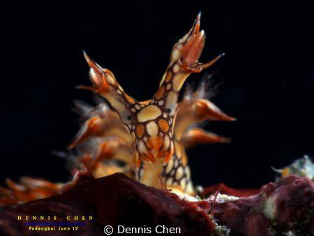 Bornella anguilla by Dennis Chen