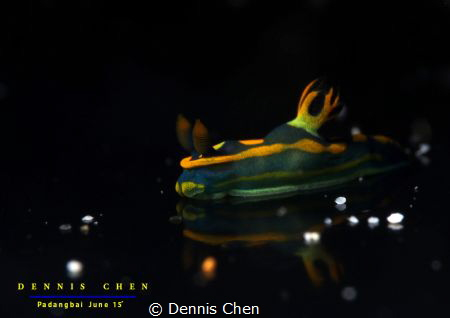 Reflection Tambja sp by Dennis Chen