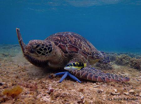 Apo Island Marine Sanctuary, one of the first community-o... by Sergei Tokmakov
