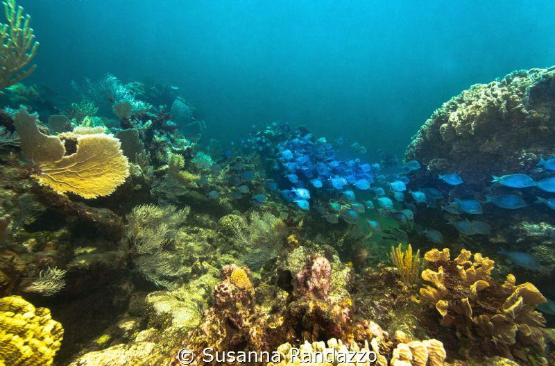 La Poza Reef, Xcalak, Quintana Roo by Susanna Randazzo