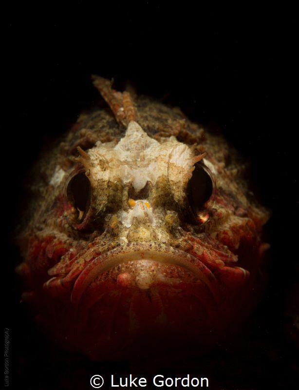 Whiteface Waspfish....why so grumpy!? by Luke Gordon