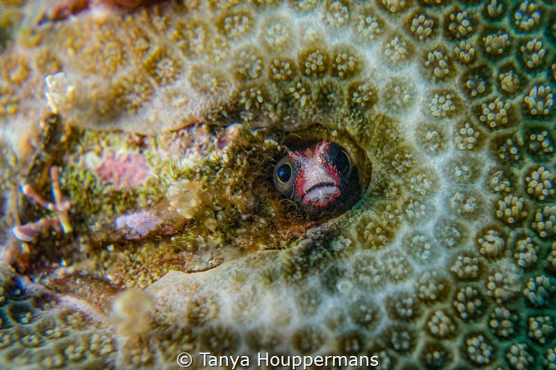 Who's There?