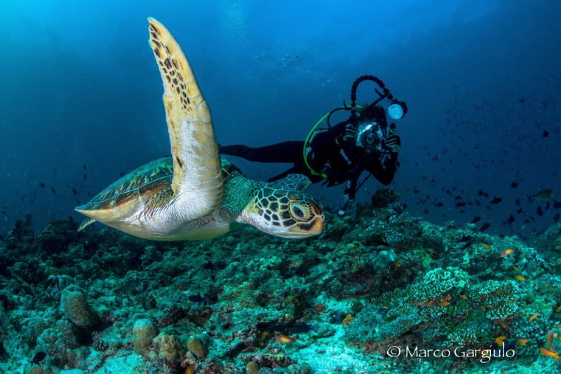 Lory shooting the green turtle by Marco Gargiulo
