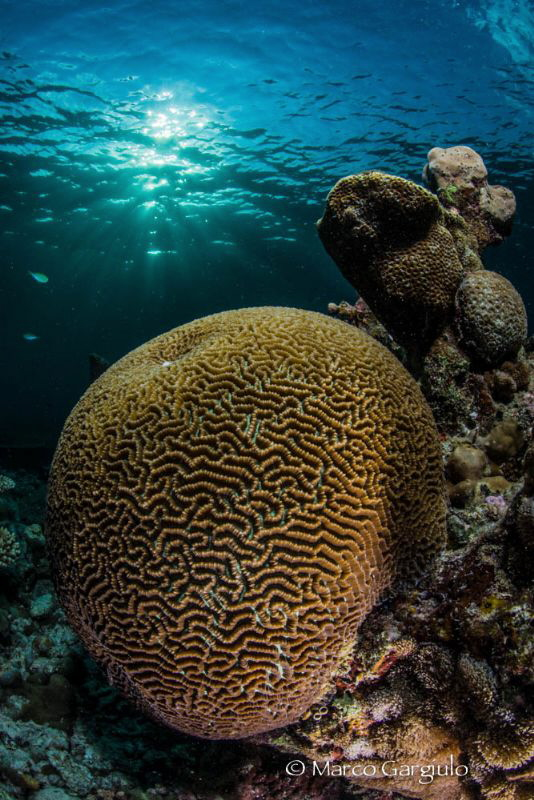 Brain Coral at sunset by Marco Gargiulo