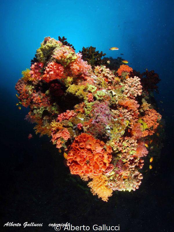 Maldivian coral reef by Alberto Gallucci