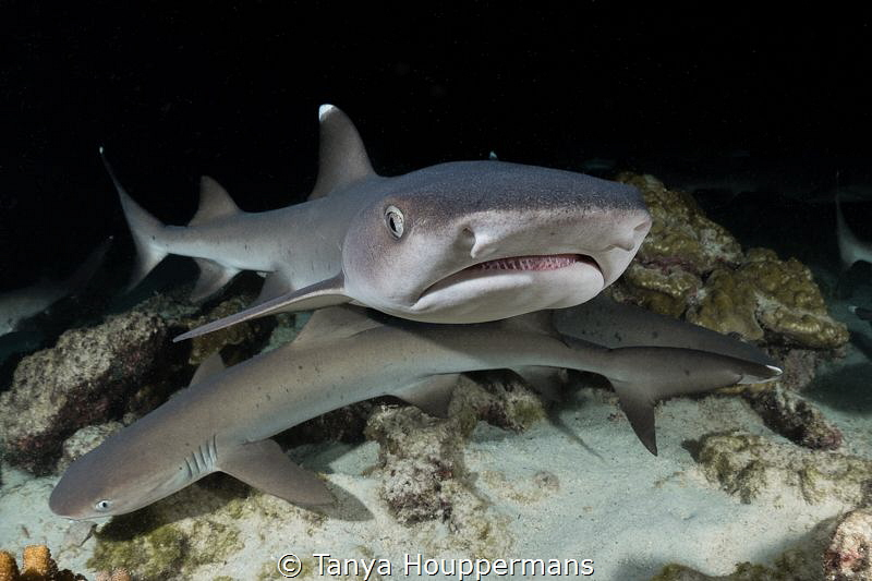 Got Anything To Eat?