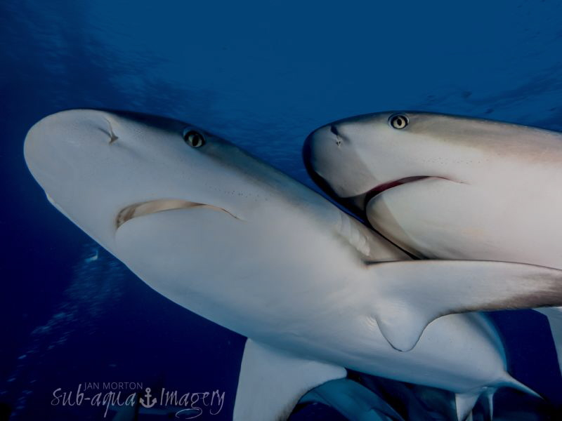 Cheek to Cheek