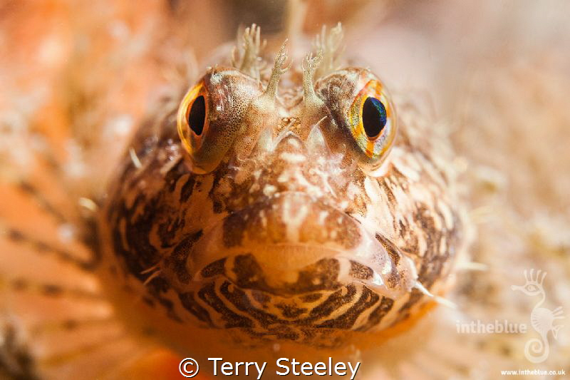 Making eye contact — Subal underwater housing, Canon 1Dx... by Terry Steeley
