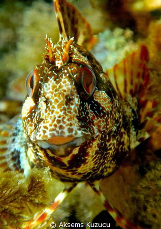happy blenny by Aksems Kuzucu