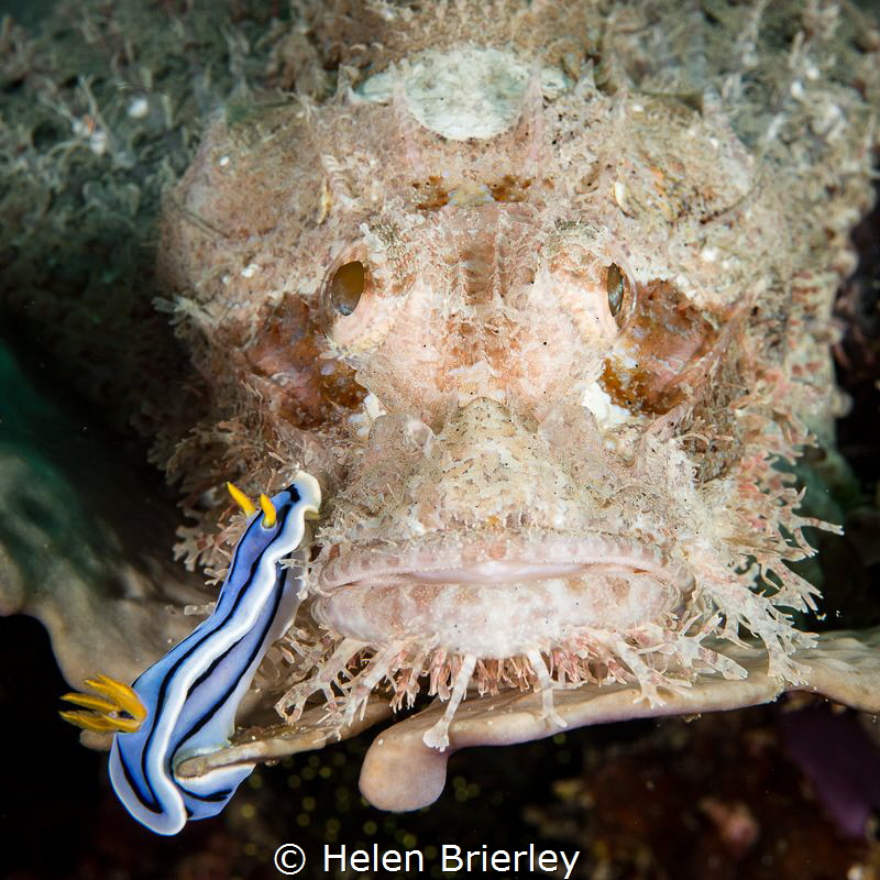 One of a series of 17 images shot as the nudibranch casua... by Helen Brierley