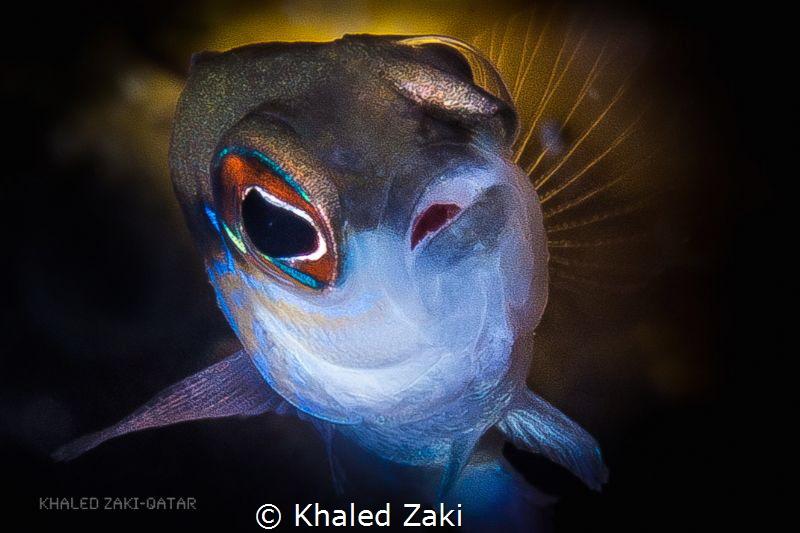 Gulf Dotty-Qatar by Khaled Zaki