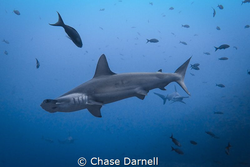 """Hammer Train""