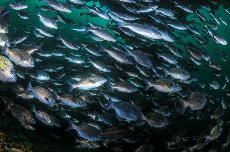 ~ Slowly but Surely ~  We benefits of marine reserves a... by Geo Cloete