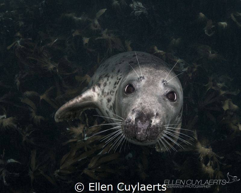 Look into those eyes, how can we not better protect our o... by Ellen Cuylaerts