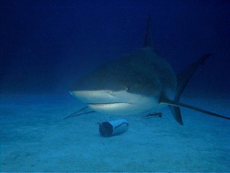 This photo was taken off Grand Bahamas Island in 2003. I ... by Steven Anderson