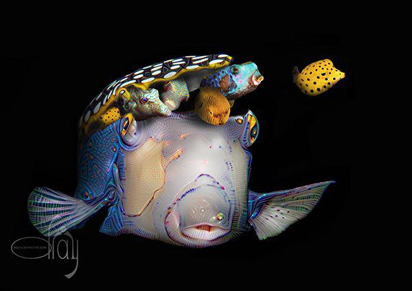 Pandora's boxfish by Dray Van Beeck