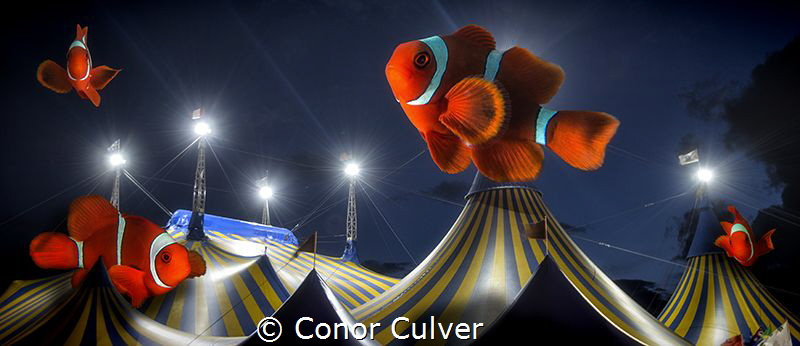 """Clownfish Circus"" part of my Underwater Surrealism series by Conor Culver"