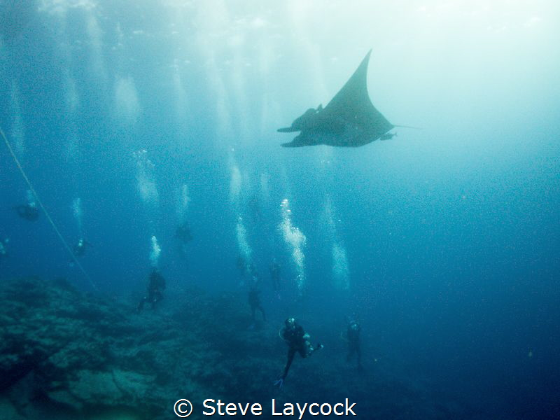 Manta comes to look at the divers - Socorro by Steve Laycock
