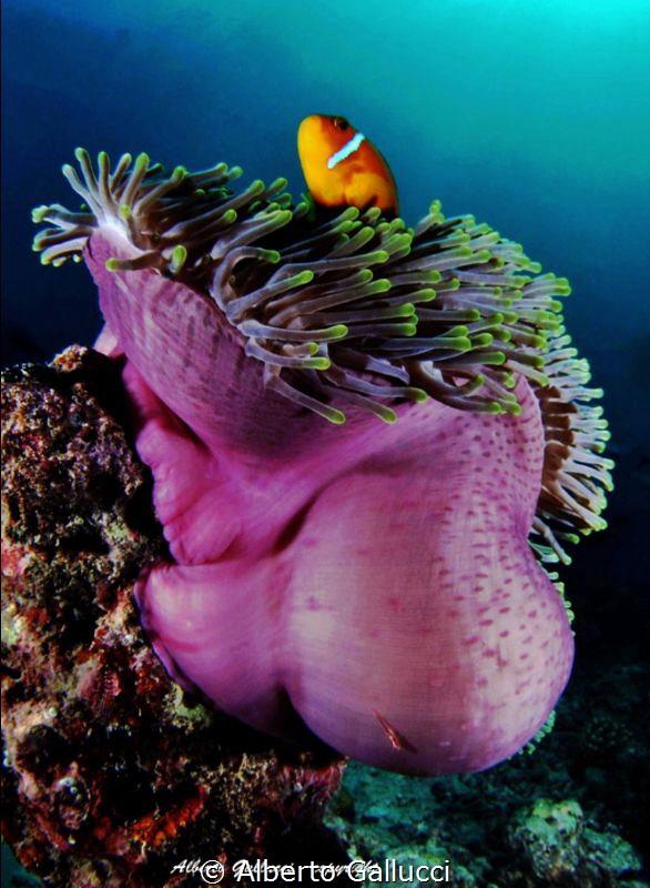 Colours of maldivian reef by Alberto Gallucci