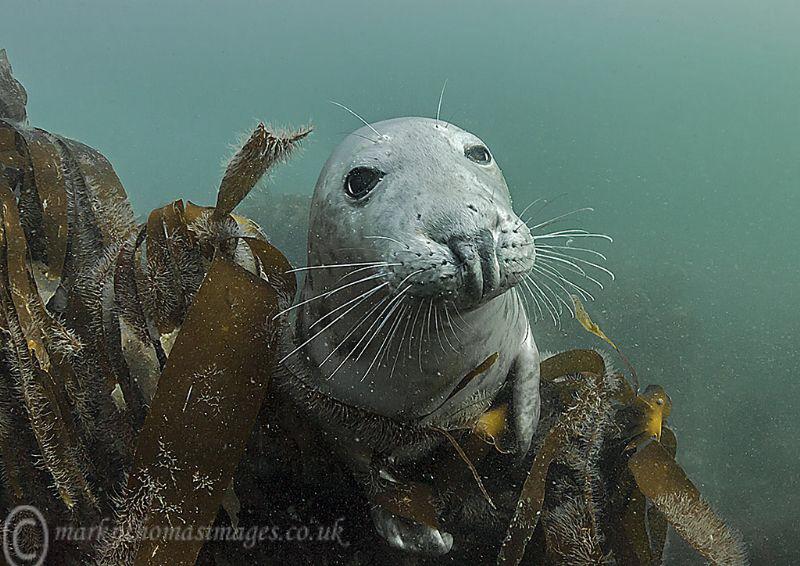 Grey seal - Farne Islands by Mark Thomas