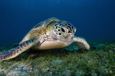 Feeding turtle by Takma Lherminier