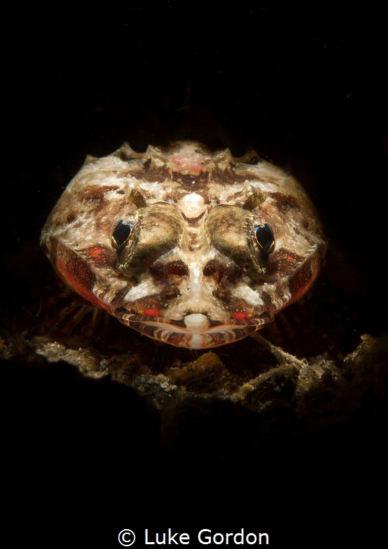 Stepping into the spotlight, a tiny flathead by Luke Gordon