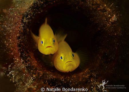 Goby by Natalie Bondarenko
