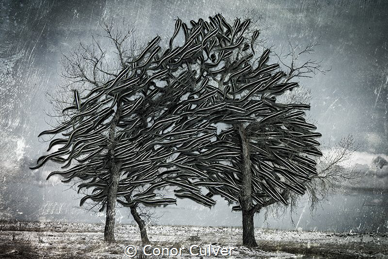 Poison Tree. Part of my Underwater Surrealism series. Ima... by Conor Culver