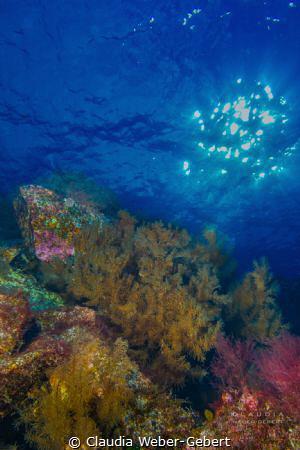 the black corals of El Hierro by Claudia Weber-Gebert
