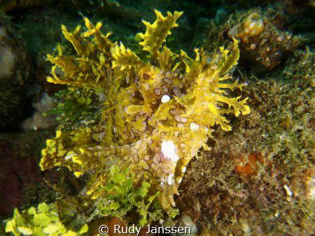 Rhinopia, Ambonbay by Rudy Janssen