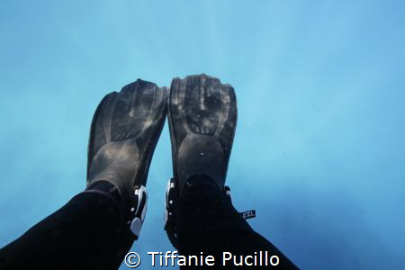 A picture of my fins the first time I put them in the Gre... by Tiffanie Pucillo