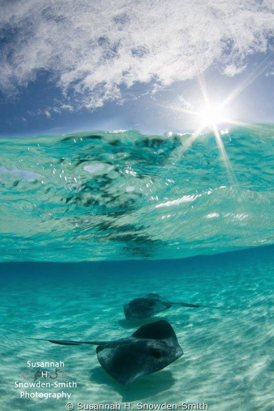"""Sunburst Stingrays!"" Over-Under at Stingray Sandbar No... by Susannah H. Snowden-Smith"