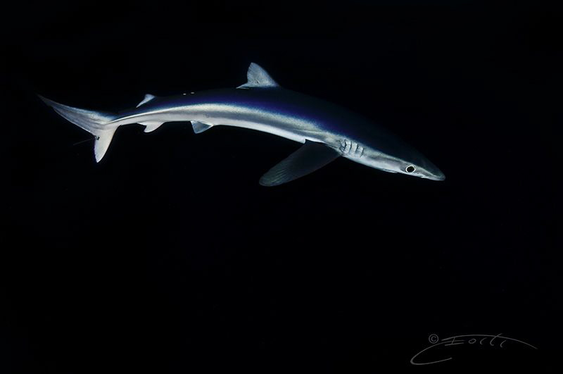 ~ Silky Smooth ~
