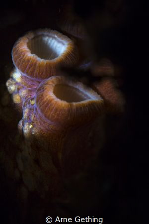 ~ Strength in numbers ~ Octopus in False Bay, Cape Town by Arne Gething