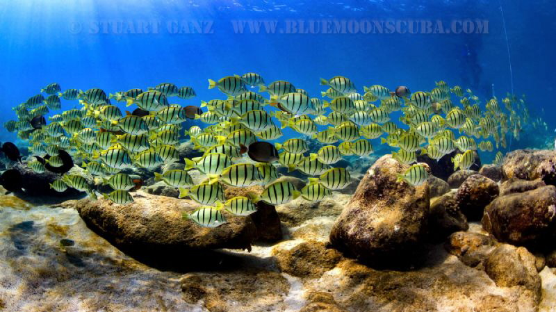 Convict Tangs by Stuart Ganz