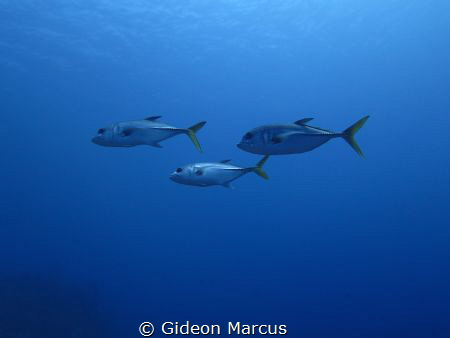 Just keep swimming. by Gideon Marcus