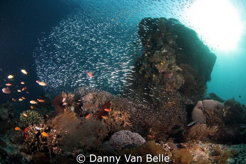 The reef near manta mantra by Danny Van Belle