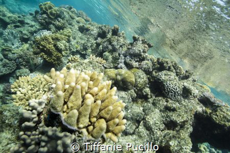 After my second dive of the day, I snorkeled around the r... by Tiffanie Pucillo