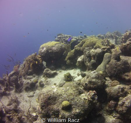 Reef Photo #5 shot in Curacao. by William Racz