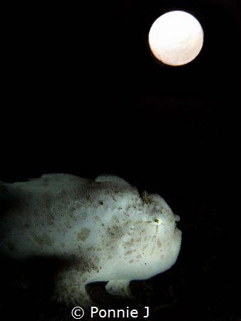 Midnight moon by Ponnie J