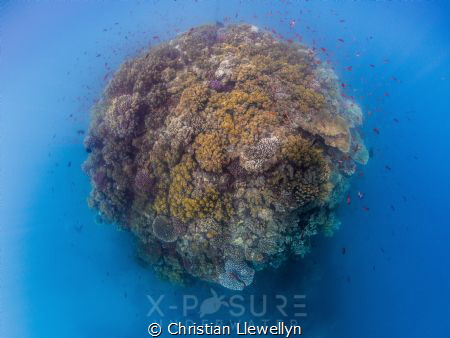 """PLANET REEF.""
