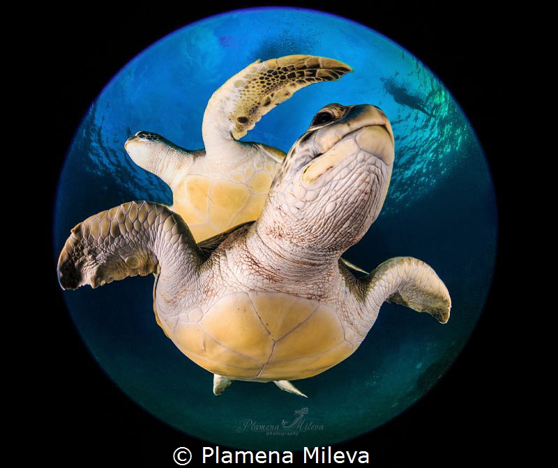 Turtle's planet by Plamena Mileva