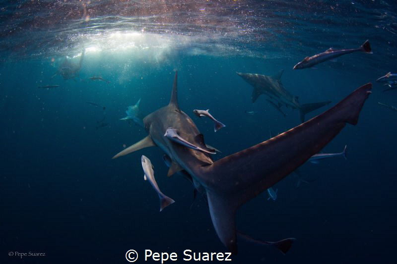 oceanic black tips by Pepe Suarez