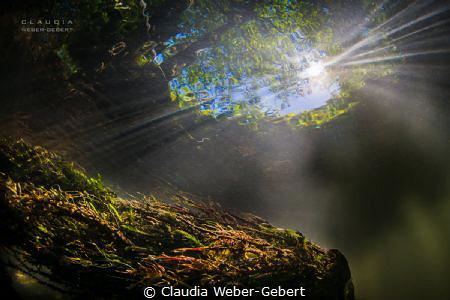 lovely freshwater river Nims - Germany, Eifel region by Claudia Weber-Gebert