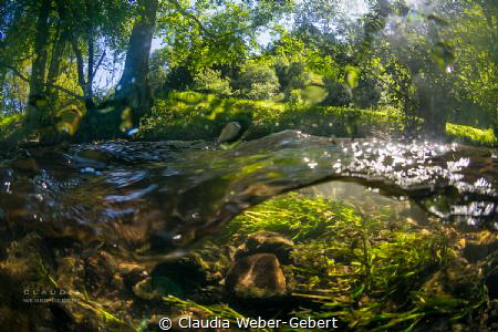 Nims river in Germany - freshwater by Claudia Weber-Gebert