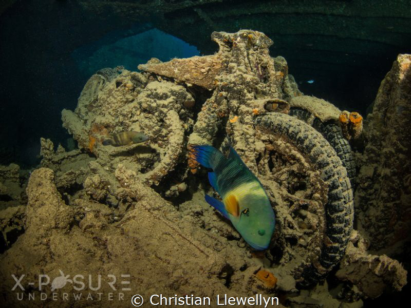 Location: Red Sea - SS Thistlegorm - WW2 BSA Motorbike