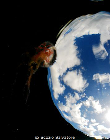 jellifish by Scozio Salvatore